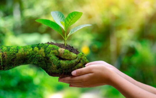 ¿Un problema o la salvación de la naturaleza?